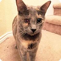 Adopt A Pet :: Sasha - Arlington/Ft Worth, TX