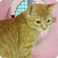 Adopt A Pet :: Chester - at Petco - Germantown, MD