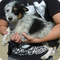 Adopt A Pet :: MOLLY - Corona, CA