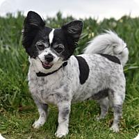 Adopt A Pet :: Pixie - San Diego, CA