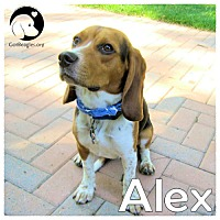 Adopt A Pet :: Alex - Pittsburgh, PA