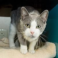 Adopt A Pet :: Flower - Wilmington, DE