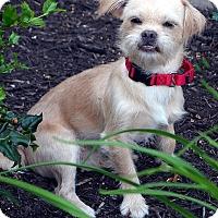 Adopt A Pet :: Wally - Bridgeton, MO