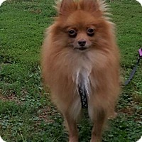 Adopt A Pet :: Reba - Harrisburg, PA