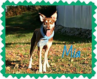 Catahoula Leopard Dog/Husky Mix Dog for adoption in Marion, Kentucky - Mia