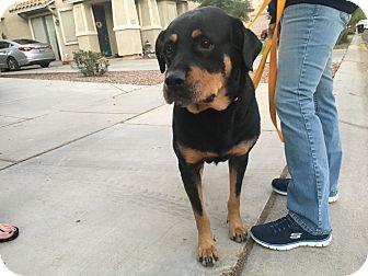 Rottweiler Dog for adoption in Gilbert, Arizona - Demi