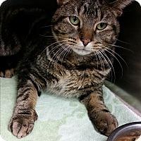 Adopt A Pet :: Ruben - Chippewa Falls, WI