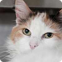 Adopt A Pet :: *MINDY - Camarillo, CA