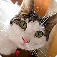 Adopt A Pet :: Zelda - Byron Center, MI
