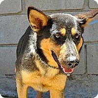 Adopt A Pet :: Shiela - San Diego, CA
