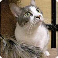 Adopt A Pet :: Jean Gray - Irvine, CA