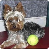 Adopt A Pet :: Bailey - Rigaud, QC