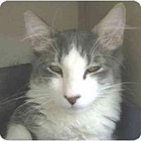 Adopt A Pet :: Kona - Mesa, AZ