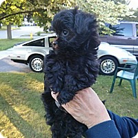 Adopt A Pet :: Wally - Northumberland, ON