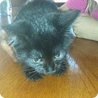 Adopt A Pet :: Cuke - Putnam, CT