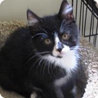 Adopt A Pet :: Mimi - bloomfield, NJ