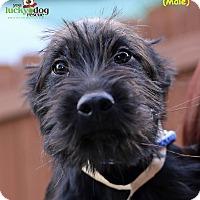 Adopt A Pet :: Guthrie - Alpharetta, GA