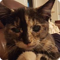 Adopt A Pet :: Tallulah - Homewood, AL