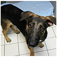 Adopt A Pet :: Cody - Forked River, NJ