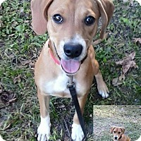 Adopt A Pet :: Two socks in CT - Manchester, CT
