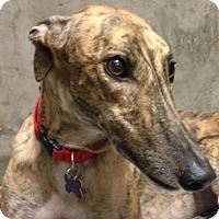 Adopt A Pet :: Abby - Tucson, AZ