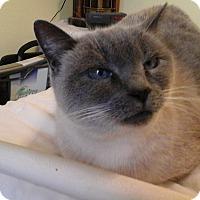 Adopt A Pet :: Jessie - Boise, ID