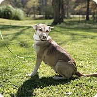 Adopt A Pet :: Kota - Daleville, AL
