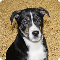 Adopt A Pet :: GOOGLE - Harmony, Glocester, RI