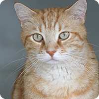 Adopt A Pet :: Sunny - North Fort Myers, FL