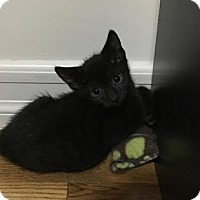 Adopt A Pet :: Dakota - New York, NY