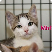 Adopt A Pet :: Misty - Baton Rouge, LA