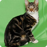 Adopt A Pet :: MALLOMAR - Gloucester, VA