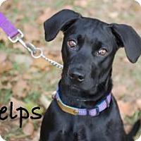 Adopt A Pet :: Phelps - Minneola, FL