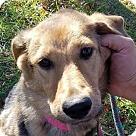 Adopt A Pet :: Myra *Adoption Pending*