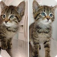 Adopt A Pet :: Baby Green Eyes - 1 & 2 - Hudson, NY