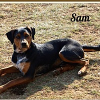 Doberman Pinscher/Black and Tan Coonhound Mix Dog for adoption in Lancaster, Kentucky - Sam