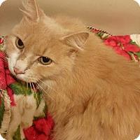 Adopt A Pet :: Ike - Greensburg, PA
