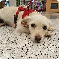 Adopt A Pet :: Feliz - Monrovia, CA