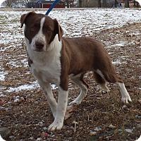 Adopt A Pet :: Markey - Bedminster, NJ