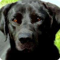 Adopt A Pet :: HUDSON(OUR
