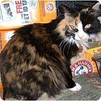Adopt A Pet :: Zen-Zen - Springdale, AR