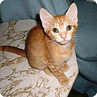 Adopt A Pet :: Mango - Kirkwood, DE
