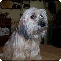 Adopt A Pet :: Missy - Mays Landing, NJ