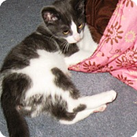 Adopt A Pet :: Scout - brewerton, NY