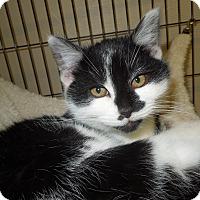 Adopt A Pet :: Penguin - Medina, OH