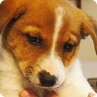 Adopt A Pet :: Ray - Prole, IA