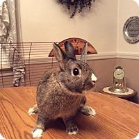 Adopt A Pet :: Cocoa - Conshohocken, PA