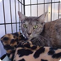 Adopt A Pet :: Chloe - Berkeley, CA