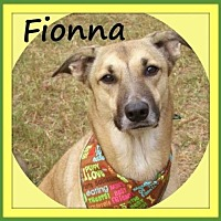 Adopt A Pet :: Fionna - Raleigh, NC