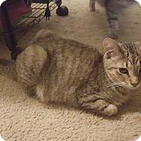 Adopt A Pet :: Singe - Fairborn, OH